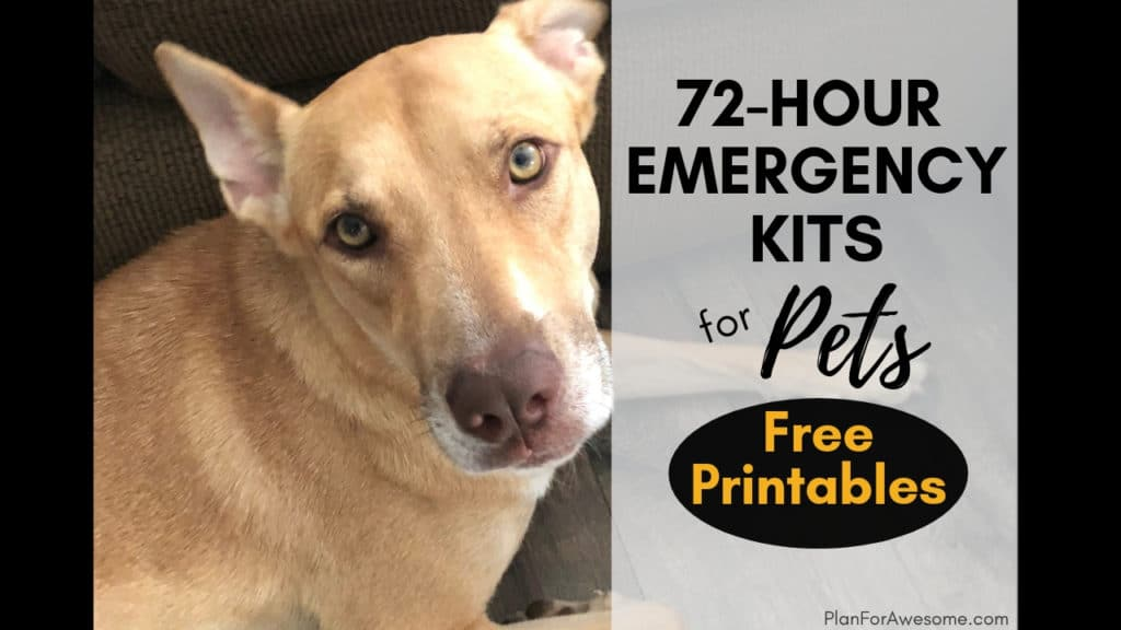 72-Hour Kits for Pets - FREE PRINTABLE Checklist - Don't forget your pets! This post has a comprehensive list of things to prepare and pack in a 72-hour emergency kit for your pets! PlanForAwesome